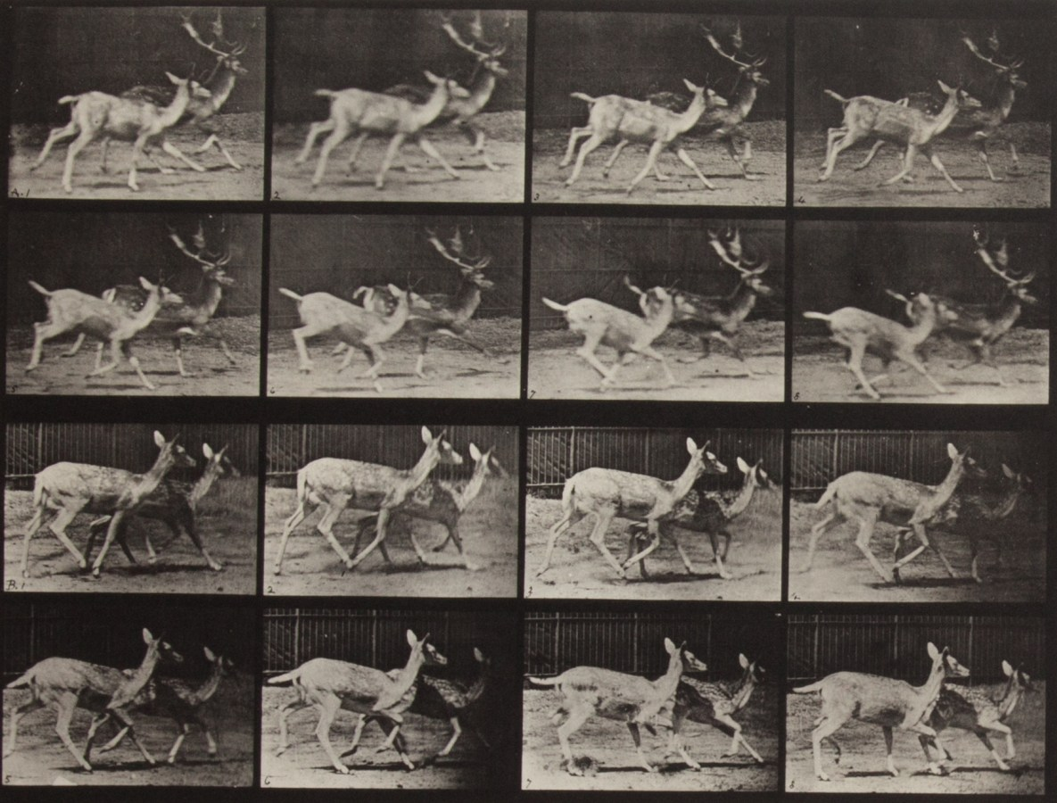 Four horizontal rows of horizontal black-and-white photographs of two deer running side-by-side