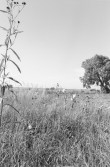 Vertical black-and-white photograph of a grassy field with a plant on the left side and a tree on the right side.