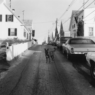 Black-and-white photograph of a dog in an empty residential street.