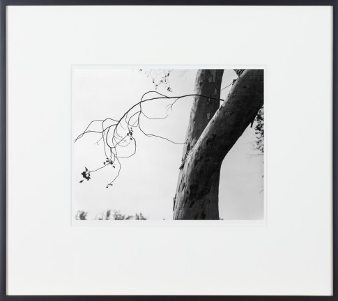 A framed black and white photograph of a tree trunk on the right, with a thin branch in silhouette on the left