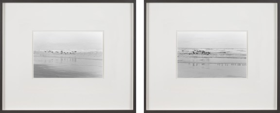 Two framed black and white photographs of birds flying low over the ocean