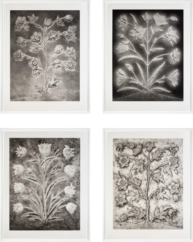 Four framed photogravures of flowers in a grid
