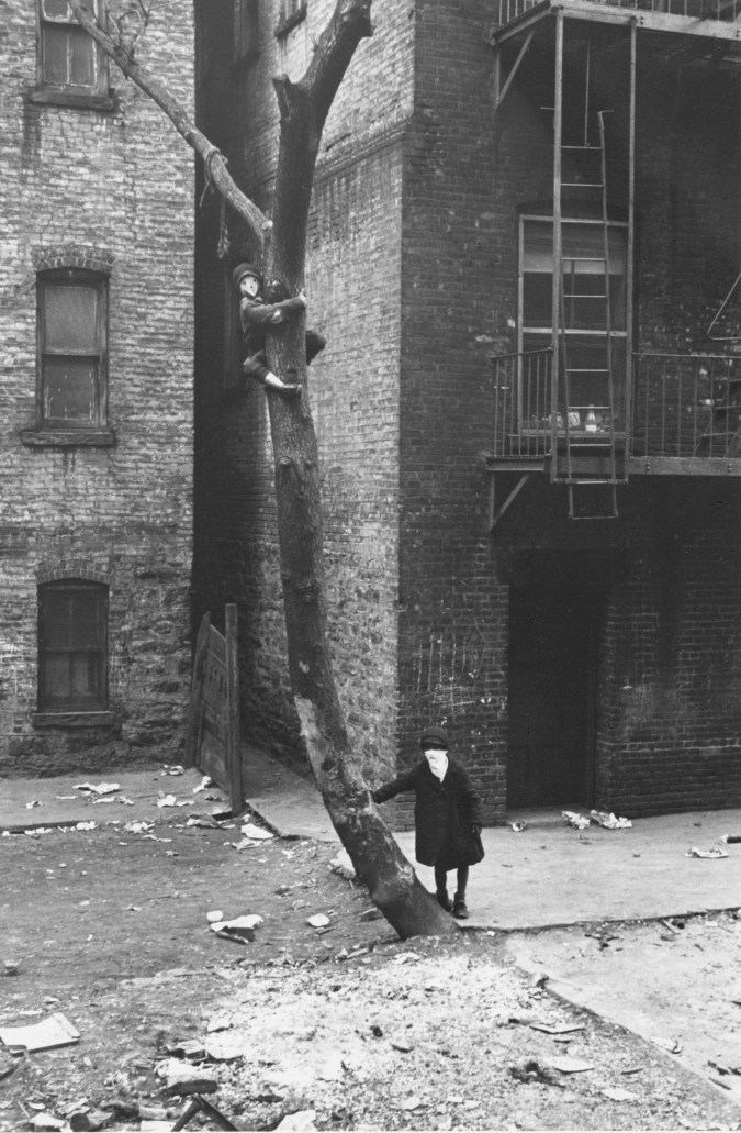 Black-and-white photograph of a tall, curved tree, with one boy climbing near its top, and another leaning against its trunk at the bottom.