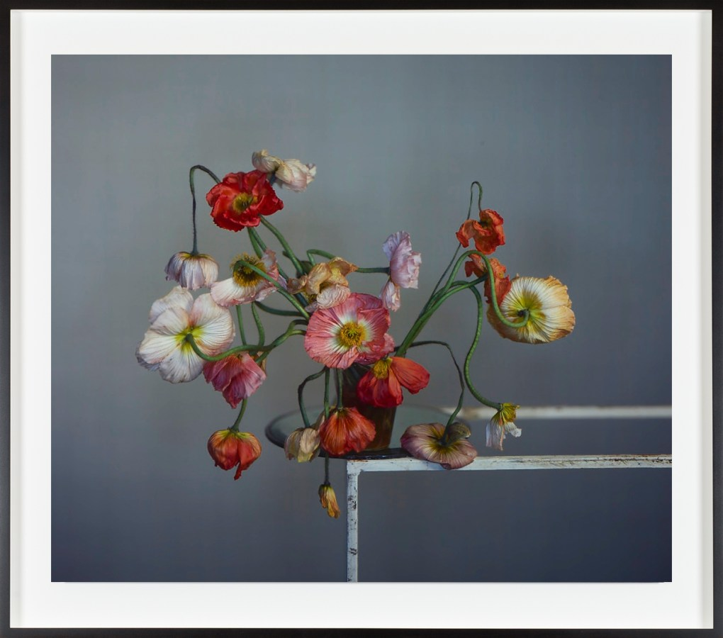 Color photograph of a bouquet of poppies at the edge of a lucite table.