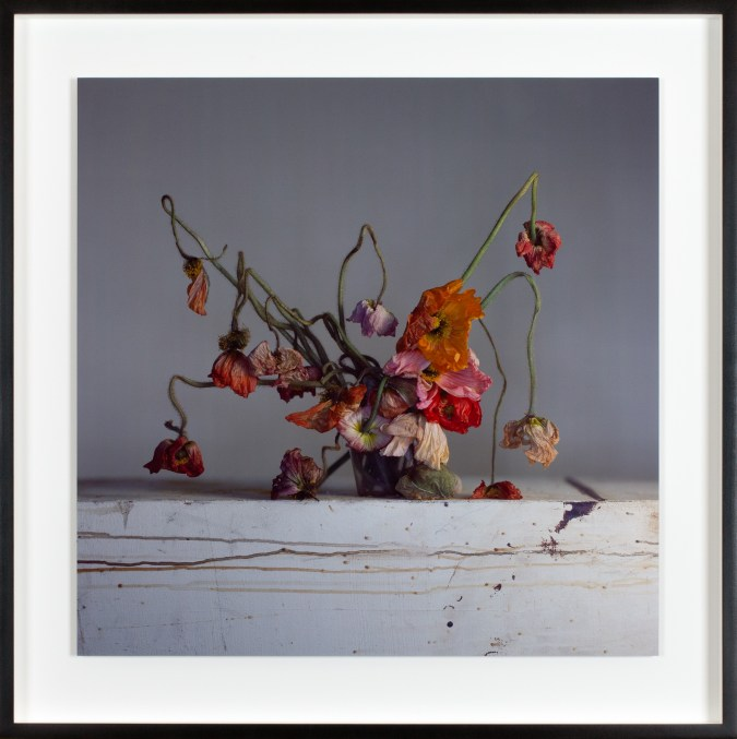 Framed color photograph of a bouquet of drying poppy flowers.