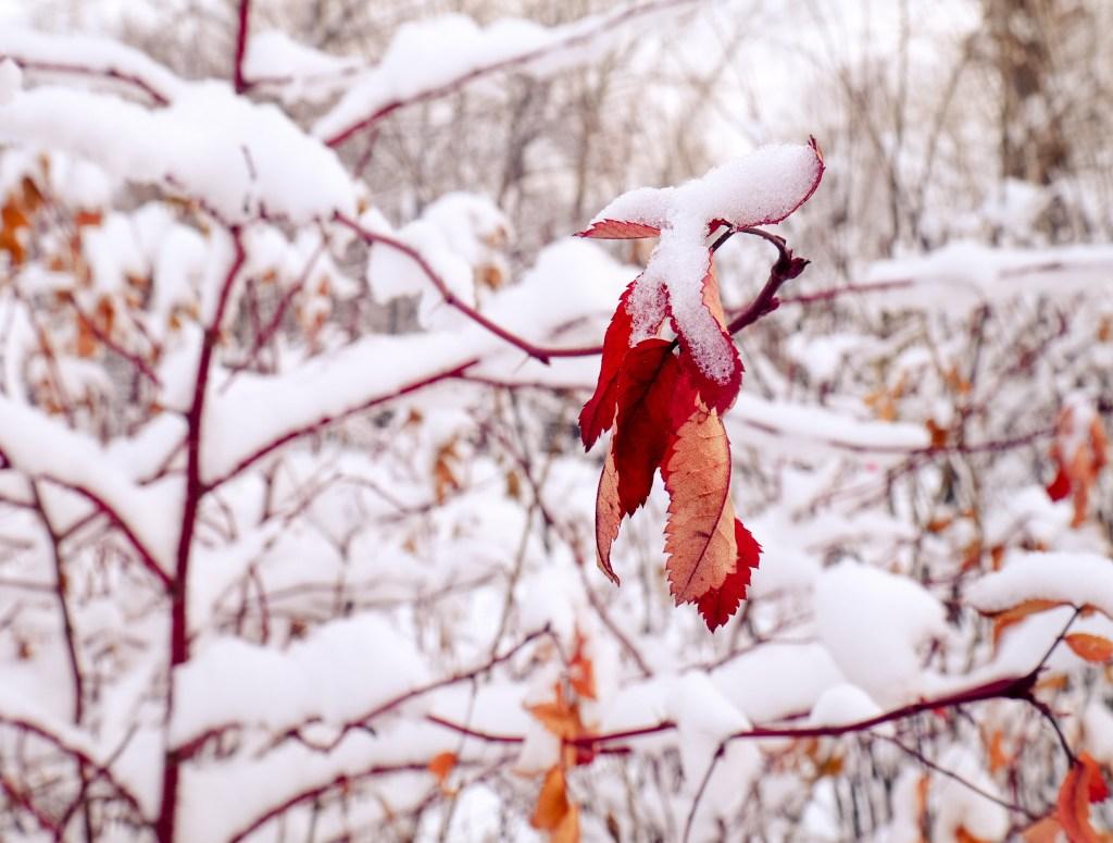 Schneelast Dezember