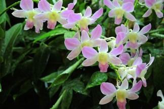 Ogrody-Botaniczne-Singapuru-05