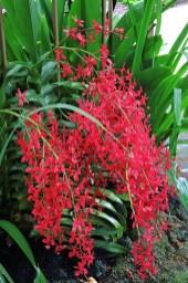 Ogrody-Botaniczne-Singapuru-08