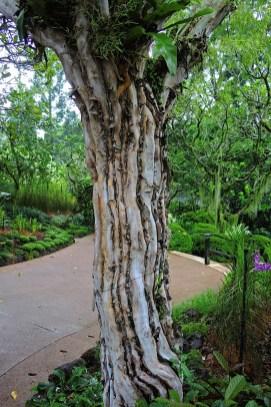 Ogrody-Botaniczne-Singapuru-23