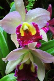 Ogrody-Botaniczne-Singapuru-37