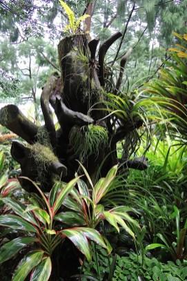 Ogrody-Botaniczne-Singapuru-44