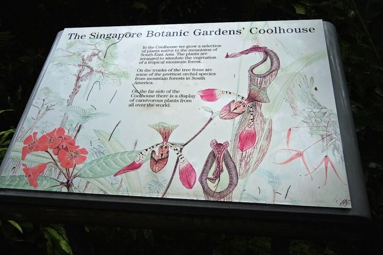 Ogrody-Botaniczne-Singapuru-46