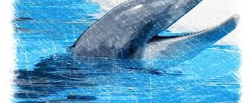 Igorek powiedział… (delfin)