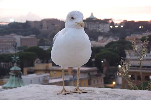 Rzym_na dachu Bazyliki św. Piotra w Watykanie 002