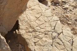 Izrael-zwiedzanie twierdzy Masada 019.NEF