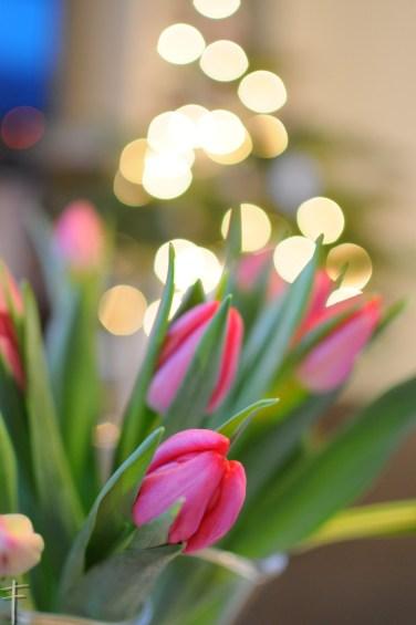 choinka i tulipany tulipany 02