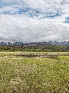 Alaska Rezerwat ptaków Potter Marsh 03