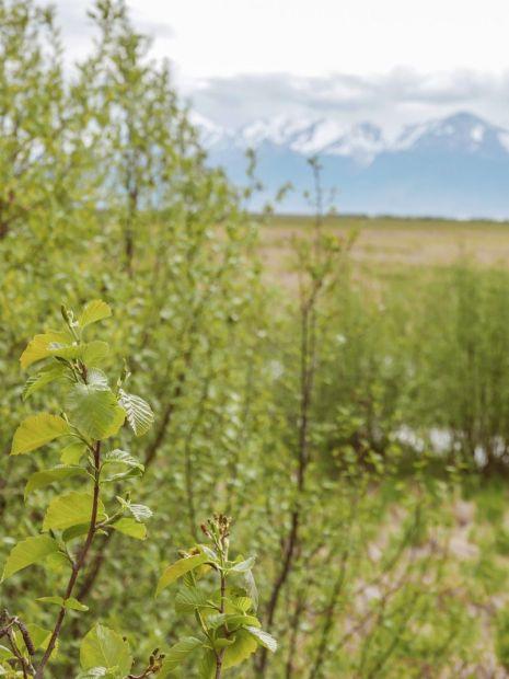 Alaska Rezerwat ptaków Potter Marsh 06