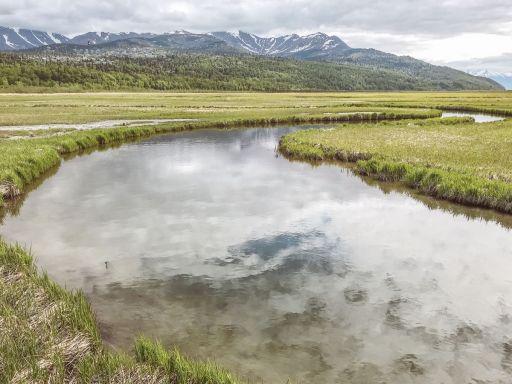 Alaska Rezerwat ptaków Potter Marsh 12