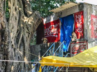 atrakcje Bombaju-co warto zobaczyć-Indie wyspa Elefanta-009