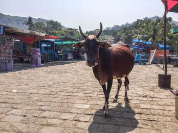 atrakcje Bombaju-co warto zobaczyć-Indie wyspa Elefanta-010