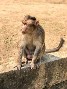 atrakcje Bombaju-co warto zobaczyć-Indie wyspa Elefanta-013