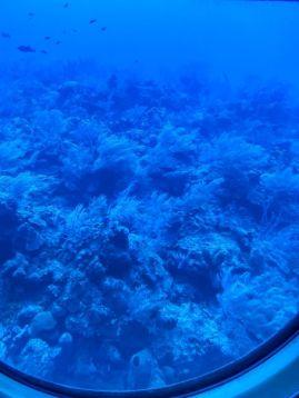 Atlantis Submarines Cayman-łódź podwodna-atrakcje Kajmany co robić zobaczyć na Kajmanach-005
