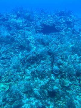 Atlantis Submarines Cayman-łódź podwodna-atrakcje Kajmany co robić zobaczyć na Kajmanach-007