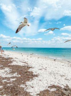 USA-stan Floryda-Key Biscayne-plaża w okolicy latarni morskiej 12