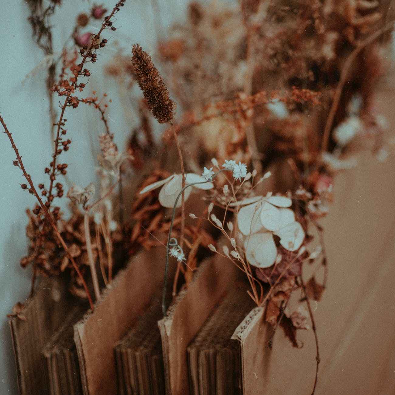 white flowers on brown wooden fence