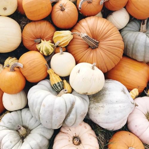 11 Pumpkin Recipes