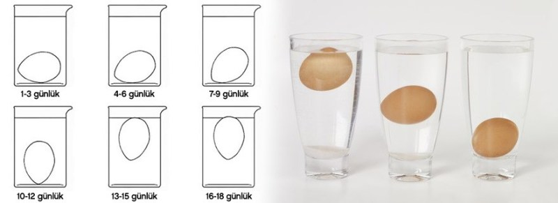 suda-yumurta