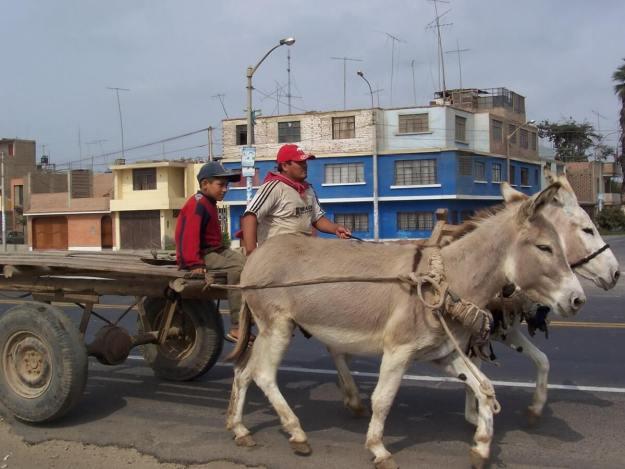 Man drives a donkey cart, pan american highway, peru