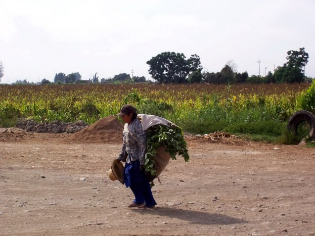 Woman carries produce alongside the Pan Amerian Highway in Peru, South America