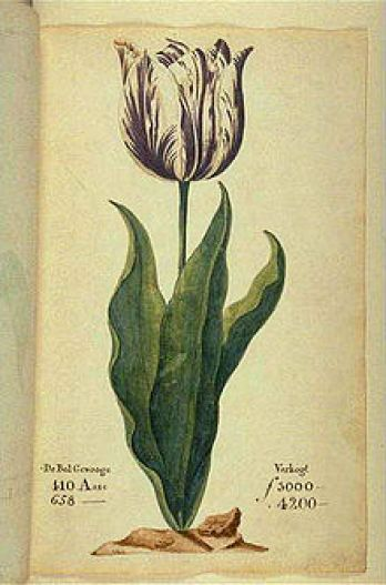 An image of a drawing of a tulip.