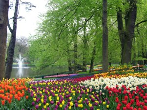 Tulip beds beside a pond at Keukenhof Gardens in the Netherlands.