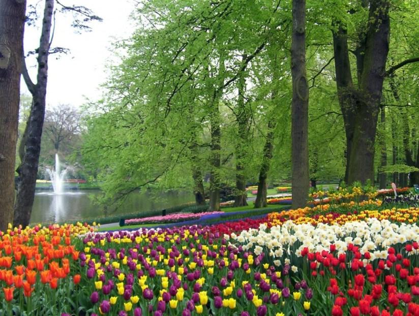 An image of tulip beds beside a pond at Keukenhof Gardens near Lisse in the Netherlands. Photography by Frame To Frame - Bob and Jean.
