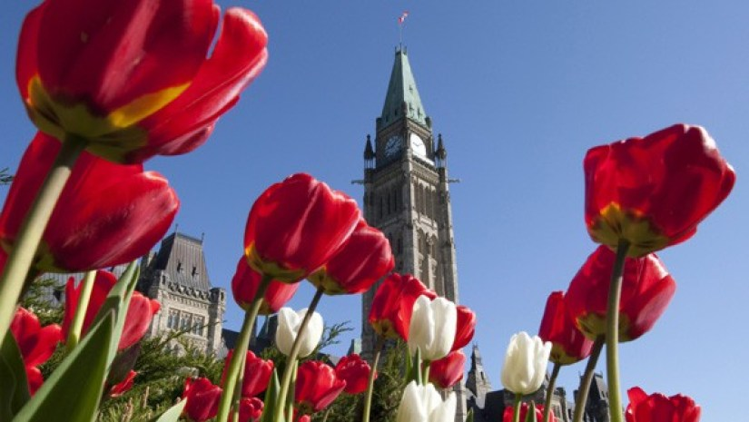 An image of red and white tulips growing on Parliament Hill in Ottawa, Canada. Photography by Frame To Frame - Bob and Jean.
