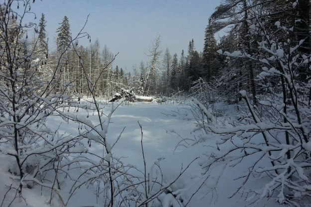 Meadow on Fen Lake Ski Trail - Algonquin Park - Ontario