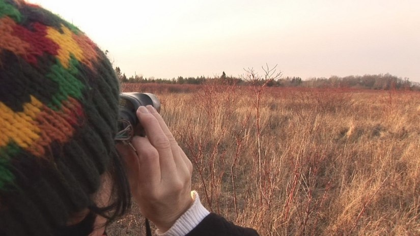 Searching for deer amongst the dogwood - Lynde Shores Conservation Area, Whitby, Ontario