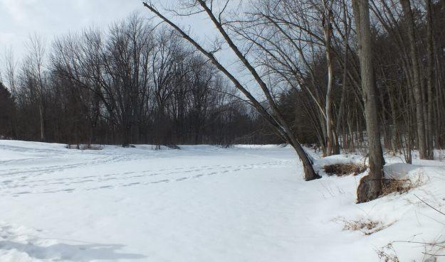 Frozen Creek 1 South of Ottawa, Ontario, Canada