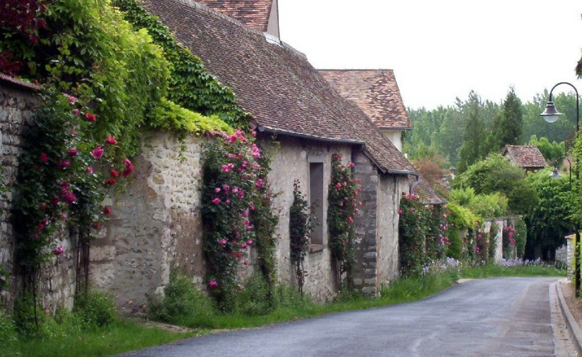 An image of roses growing along a laneway in Giverny, France.