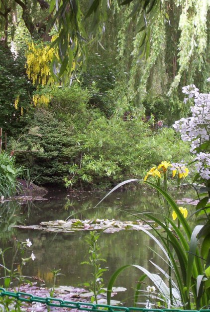 An image of yellow and white Wisteria growing above Monet's Lily Pond in Giverny, France.