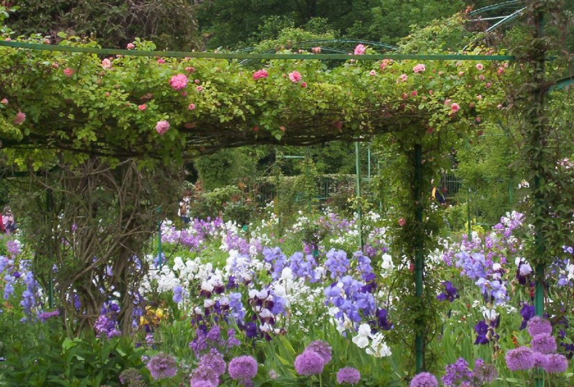 An image of Roses, Phlox, Irises and Allium growing in Claude Monet's House Garden in Giverny, France.