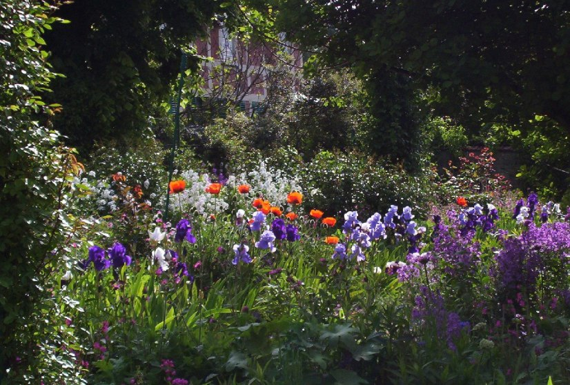 An image of Poppies and Irises growing in Claude Monet's House Garden in Giverny, France.
