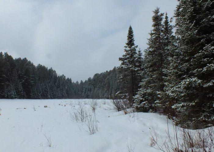 Beaver Pond on the Beaver Pond Trail in Algonquin Provincial Park