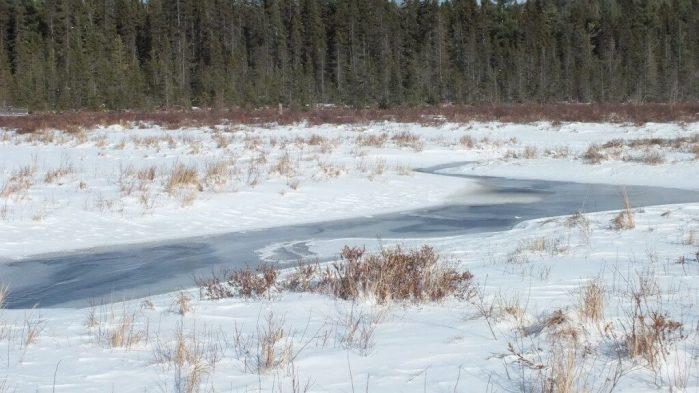 Frozen water in Spruce bog in Algonquin Provincial Park