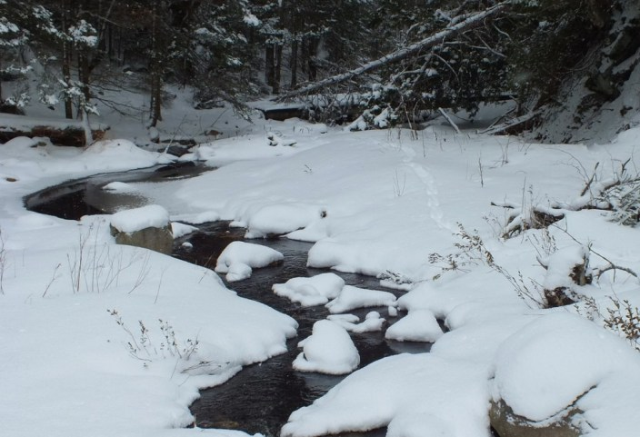 Otter tracks through snow along stream in Algonquin Park