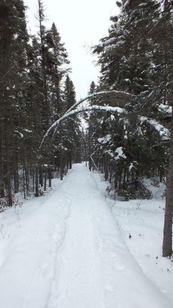 Spruce Bog boardwalk - Algonquin Park - Ontario