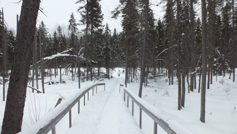 Spruce Bog boardwalk under snow in Algonquin Park - Ontario